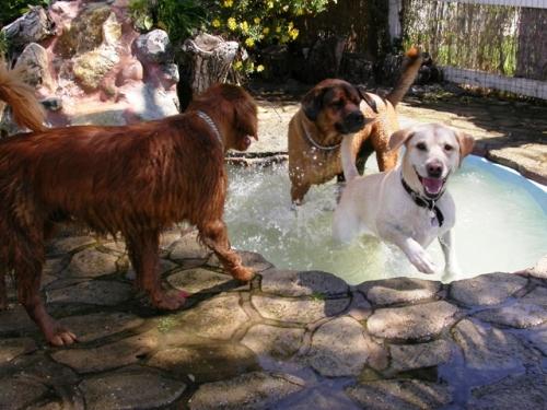 Espaço ainda conta com o primeiro parque aquático canino dos EUA