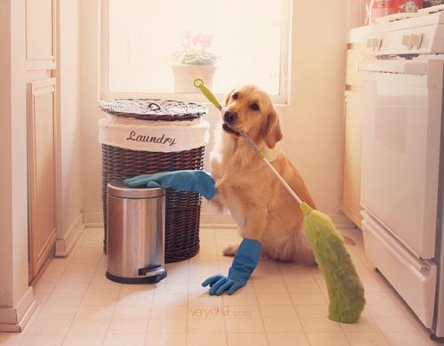 """""""Ninguém é obrigado a gostar de cães. O que precisa é ter bom caráter e sensibilidade"""", adverte especialista"""